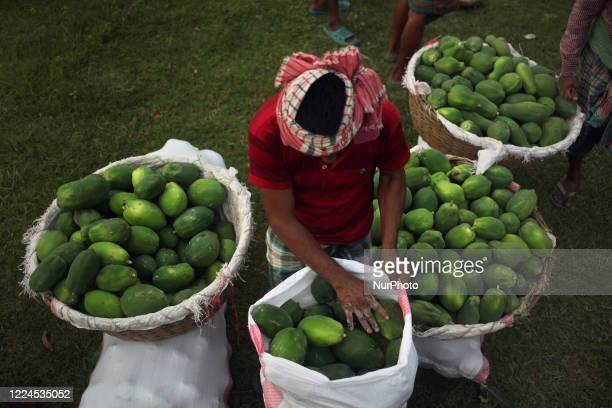 Worker arranges papaya fruits to sell in Magura, Bangladesh on July 02, 2020.