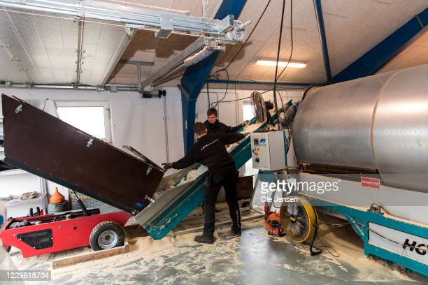Worker at a conveyor belt leading culled minks into a cleaning tunnel on November 14, 2020 in Jyllinge, Denmark. After a Covid-19 mutation moving...