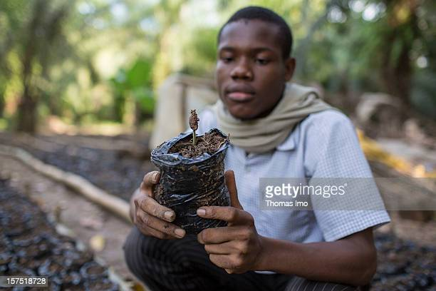 A worker at a Mondoni cocoa plantation holding a cocoa tree seedling on October 30 2012 in Mondoni Cameroon