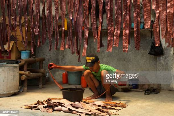 Worker at a small workshop which makes snake skin purses and wallets, dyes snake skins on March 24, 2014 in Comal Indonesia. Small workshops...
