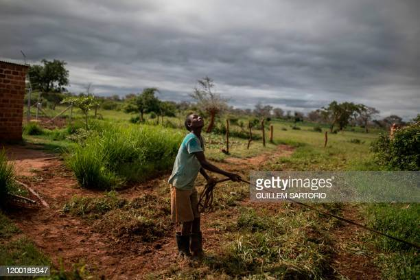 Worker at the farm owned by Linah and Godfrey Hapaka looks at the clouds in Kaumba on January 21, 2020. - Linah and Godfrey Hapaka is part of a...