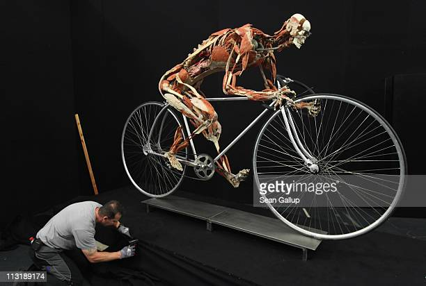 Worker attaches a black cover to the base under a plastinated human corpse with its muscles pulled apart and posed to look like a cyclist in...