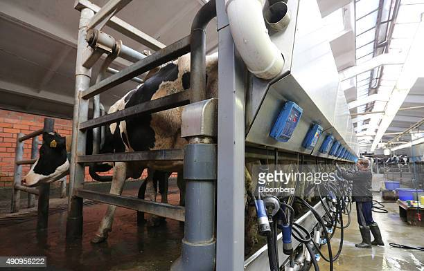 A worker attends to machinery in the milking parlor at the Poyma stateowned milk farm in Krasnaya Poyma Russia on Friday Sept 18 2015 Across the...