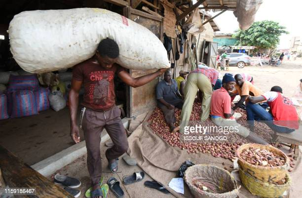 50 Kola Nut Pictures, Photos & Images - Getty Images