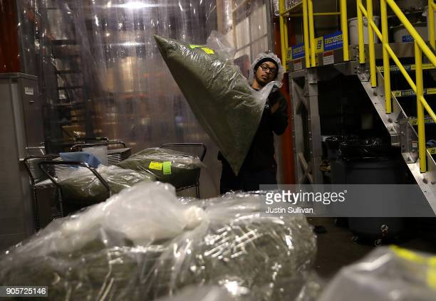 A worker carries a bag of marijuana that will be used to make marijuana infused chocolate edibles at Kiva Confections on January 16 2018 in Oakland...
