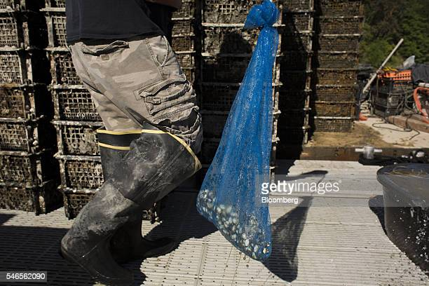 A worker carries a bag of young geoducks on a floating growing facility operated by the Taylor Shellfish Co near Olympia Washington US on Tuesday May...