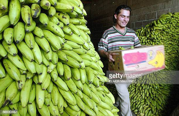 Worker carries a box with bunches of bananas at the warehouse of a market in Tegucigalpa, 05 January 2006. The Honduran government will present a...