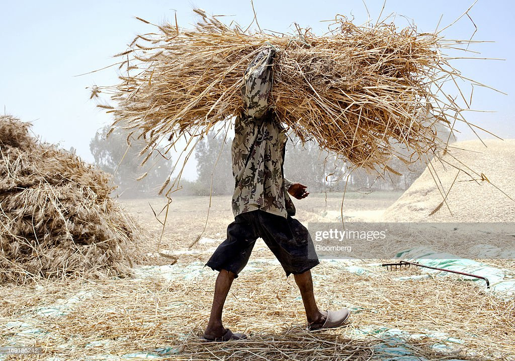 A worker carries a bundle of wheat harvested from a field in Monofeya, Egypt, on Sunday, May 19, 2013. Egypt will curb wheat imports by 31 percent to 8 million metric tons in 2012-13, still enough to make it the world's biggest buyer, the U.S. Department of Agriculture estimates. Photographer: Shawn Baldwin/Bloomberg via Getty Images