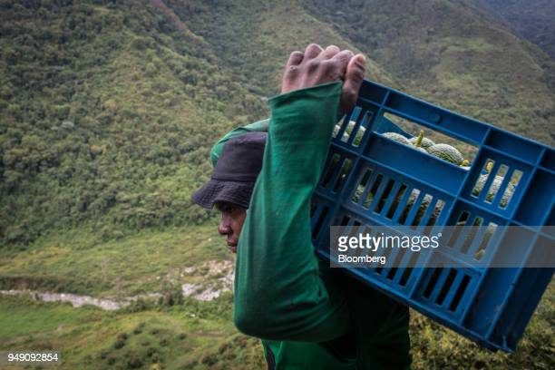 A worker carries a crate of avocados at La Regada farm in Salgar Antioquia department Colombia on Monday April 16 2018 The National Administrative...