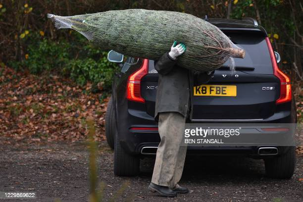 Worker carries a freshly harvest tree to a customers car at Pimms Christmas Tree farm in Matfield, south east England on November 30, 2020. - The 6...