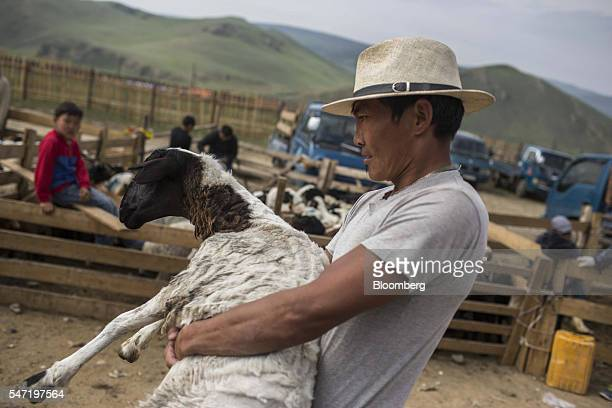 A worker carries a sheep at a livestock market on the outskirts of Ulaanbaatar Mongolia on Wednesday July 13 2016 The nation's growth slowed to 23...