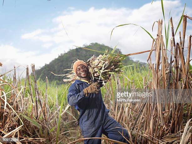 worker carrying sugar cane - sugar cane stock pictures, royalty-free photos & images