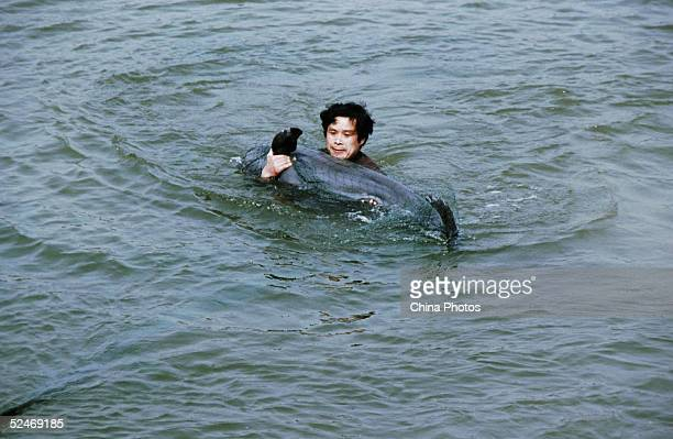A worker catches a Finless Porpoise to inspect at the Tongling Freshwater Dolphin Nature Reserve March 21 2005 in Tongling of Anhui Province China...
