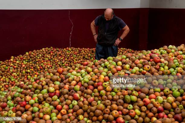 A worker checks cider apples at the Foncueva's llagar in San Roman Asturias region on October 20 2018