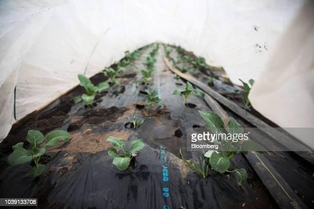 A worker checks control panels at the Everyday Farm LLC Monnaran Solar Farm Project a joint venture between Bridge LLC and Farmdo Co in Ulaanbaatar...