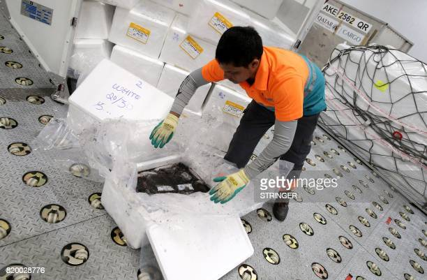 A worker checks freshly imported fish offloaded from a Qatar Airways cargo plane at a climate control centre at the Hamad International Airport in...