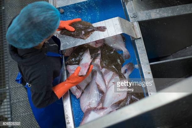 A worker checks sizes of freshly caught plaice ahead of auction at the port of Den Helder Netherlands on Friday Aug 4 2017 Prime Minister Theresa May...