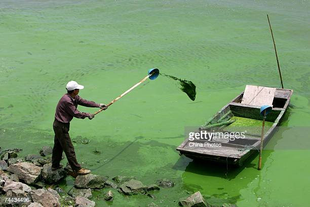 A worker collects bluegreen algae at the water intake of Nanquan Source Water Plant a major water plant for Wuxi Tap Water Supply Company on the...