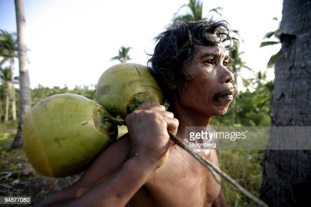 A worker collects coconuts on a coconut plantation outside Legazpi City in Bicol the Philippines on Sunday May 20 2007 The government and coconut...