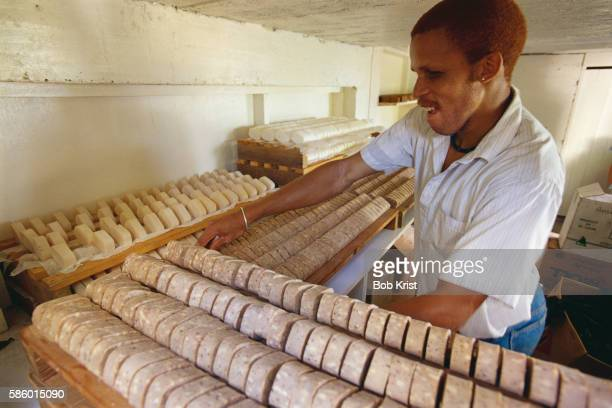 Worker Counting Nutmeg Soaps