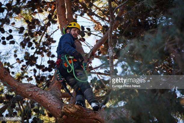 Worker cuts down one of the trees in the Royal Botanical Garden that has been damaged by the heavy snowfall caused by the Storm Filomena, on January...