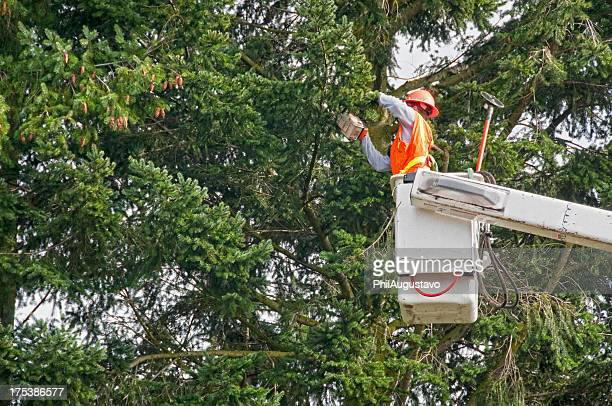 Worker cutting tree branches with chainsaw