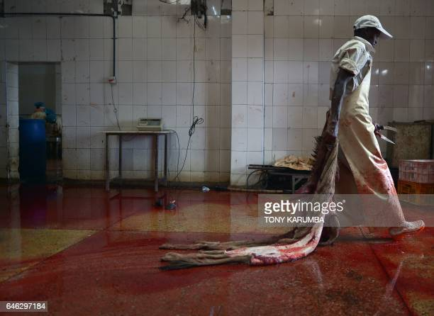 TOPSHOT A worker delivers a donkey's skin for curing at a licensed slaughterhouse specialised in donkeys in Baringo on February 28 2017 The emergence...