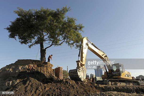 A worker directs a digger avoiding a tree as it excavates the ground at a construction site in Beijing on August 27 2009 The Chinese economy has held...