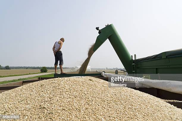 A worker directs the funnelling of wheat into a trailer during the summer harvest on a farm operated by Kernel Holding SA in Varva Ukraine on Tuesday...