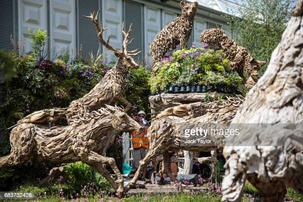 A worker drinks from a bottle as he stands among wooden animal sculptures at the RHS Chelsea Flower Show site at Royal Hospital Chelsea on May 16...