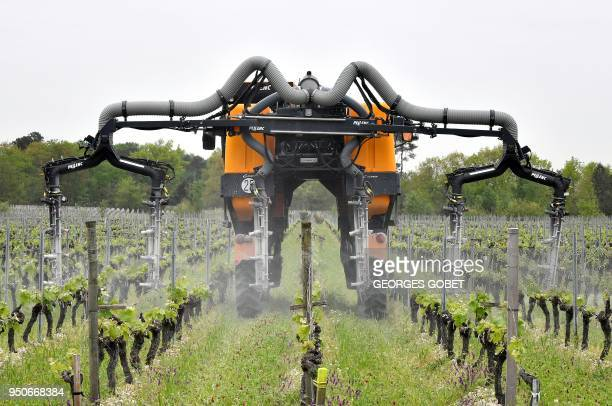 A worker drives a vineyard fumigation tractor to spread an initial phytosanitary treatment against mildew and powdery mildew two of the main diseases...