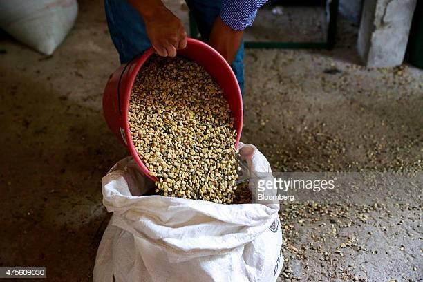 A worker empties coffee beans into a bag before roasting at the Federacion de Pueblos Mayas Atitlan indigenous farmers cooperative in San Pedro La...