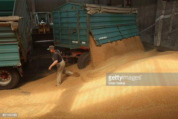 A worker empties freshlyharvested wheat from trailers at a storage hall at a largescale commercial farm near Berlin July 31 2008 in Juehnsdorf...