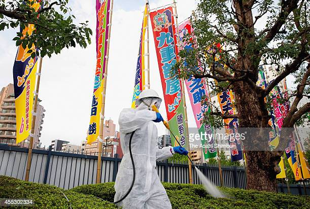 A worker exterminates mosquitoes to prevent Dengue fever spreading in preparation for the Grand Sumo Autumn Tournament at Ryogoku Kokugikan on...