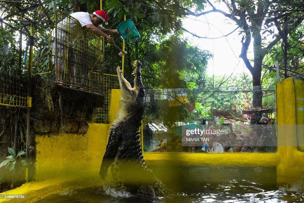 TOPSHOT-PHILIPPINES-ANIMALS-CHRISTMAS : News Photo