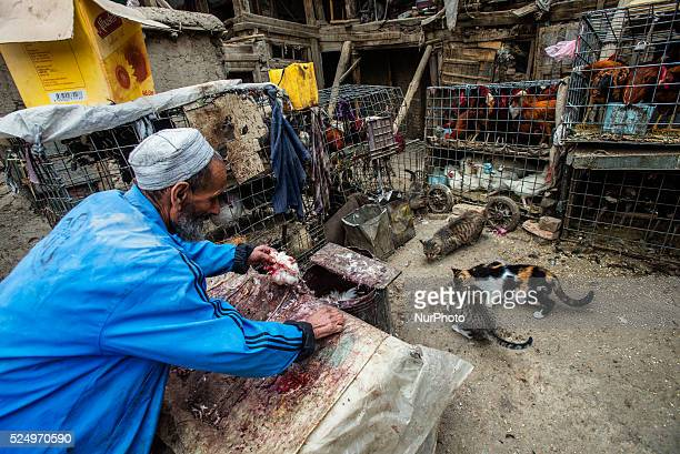 Worker feeds cats at backyard of birds market in Kabul Afghanistan