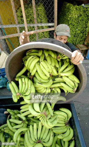 A worker fills the back of a pickup with bunches of bananas at a market in Tegucigalpa 05 January 2006 The Honduran government will present a demand...