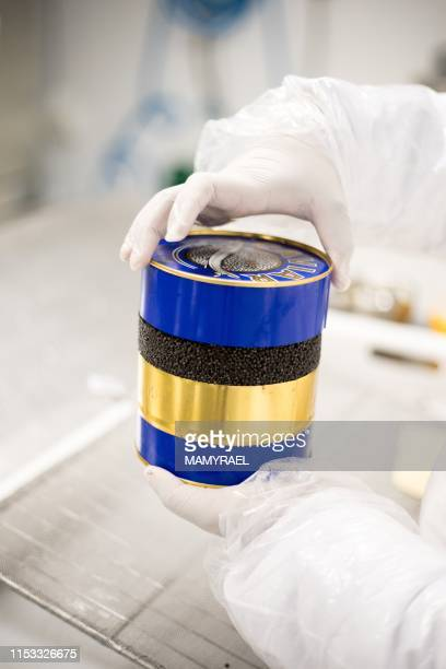 A worker from the company Rova Caviar Madagascar packs in a metal box the caviar extracted from a sturgeon at the Acipenser factory on June 4 2019 in...