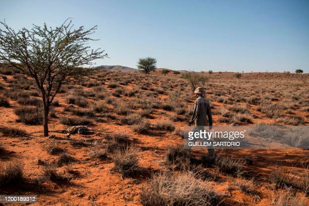 A worker from the Thuru Lodge Game farm walks towards the carcass of a dead animal at the Thuru Lodge Game farm near Groblershoop on January 16 2020...
