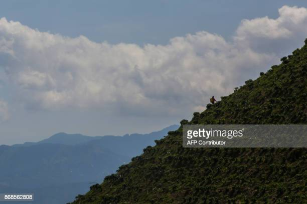 A worker fumigates a coffee plantation in the mountainous area near Ciudad Bolivar Antioquia department Colombia on October 18 2017 October is the...