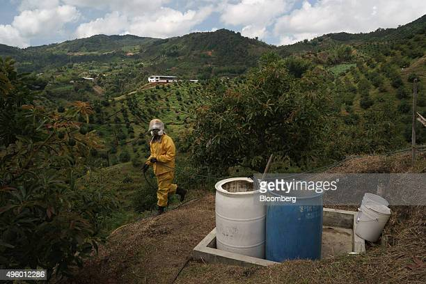 A worker fumigates avocado trees to protect them from mites a requirement for exports at the Finca Los Abuelos plantation in El Penol Colombia on...