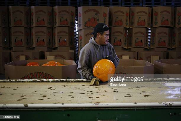 A worker grabs a newlyharvested jacko'lantern pumpkin after being washed for packaging at a Frey Farms Inc processing facility Poseyville Indiana US...