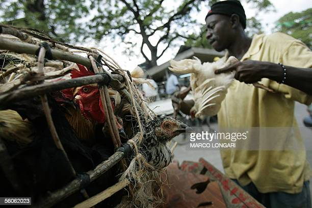 A worker handles a cage of poultry 03 November 2005 outside the reopened port market in Stone Town Zanzibar The market as well as the largest part of...