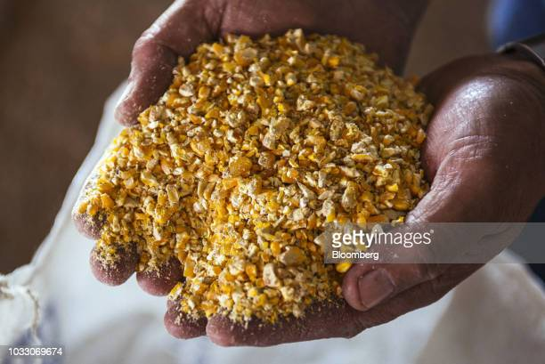 A worker handles ground corn to be used in livestock feed in an arranged photograph on the Ehlerskroon farm outside Delmas in the Mpumalanga province...