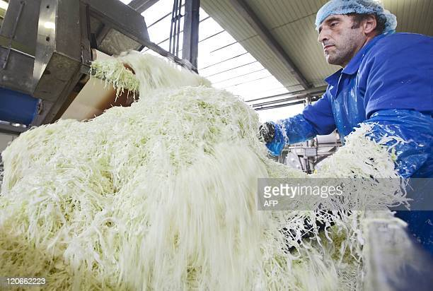 A worker handles sauerkraut in a factory in ZuidScharwoude north of Amsterdam on August 8 2011 As average temperature in the Netherlands dropped till...