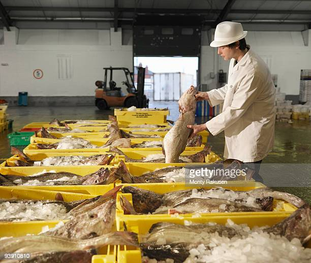 worker handling fish in market - fishing industry stock pictures, royalty-free photos & images