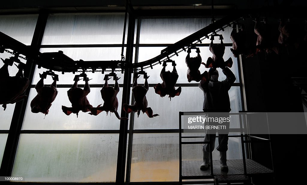 A worker hangs a turkey at a processing plant in La Calera, 125 km south of Santiago, on August 24, 2009. Chilean authorities have detected the A(H1N1) (swine flu) virus in turkeys. AFP PHOTO / Martin BERNETTI