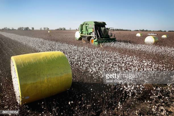 Worker harvests cotton with a John Deere cotton picker on October 30, 2017 near Wilson, Arkansas. Despite extensive damage to the nation's cotton...