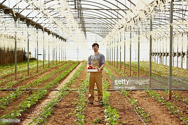 Worker holding vegetable crate in greenhouse