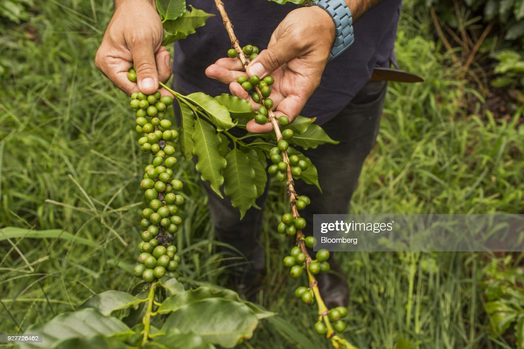 Coffee Operations In The Largest Coffee-Growing State In Brazil